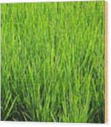 Rice Plants Wood Print