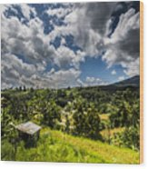 Rice Terrace Wood Print