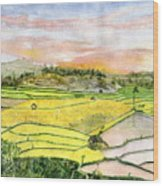 Ricefield Terrace Wood Print