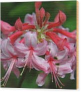 Rich Pink Blossoms Wood Print