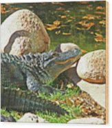 Richly Hued Colorado Gator On The Rocks 2 10282017 Wood Print