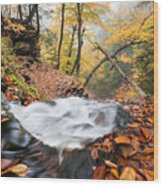 Ricketts Glen State Park Ganoga Falls Allegheny Mountains Pennsylvania Wood Print