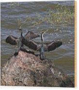 Rift Valley Cormorants Wood Print