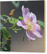 Rimrock Rose Wood Print