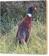 Ring Neck Pheasant Wood Print