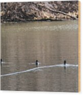 Ring-necked Duck Formation Wood Print