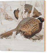 Ring-necked Pheasant Hunting In The Snow Wood Print