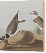 Ring Plover  Wood Print
