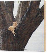 Ringtail Wood Print