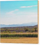Rio Grande Flood Plain Wood Print
