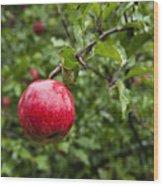 Ripe Apples. Wood Print by John Greim