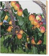 Ripe Apricots Wood Print