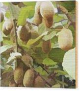 Ripe Kiwi Fruit On The Branch Wood Print