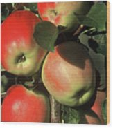 Ripening Apples Wood Print