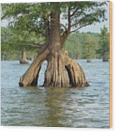 Ripley Tennessee Cypress Wood Print