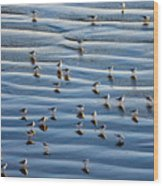 Ripples Of Sand Dotted With Plovers Wood Print