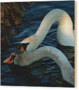 River Bank Swans Nature Pictures For Sale Wood Print