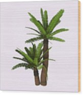 River Cycad Plants Wood Print