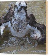 River Hawk Splashing Around In The Water Wood Print