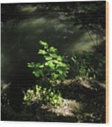River In The Woods Wood Print