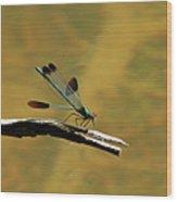 River Jewelwing Wood Print