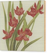 River Lily Or Crimson Flag Wood Print