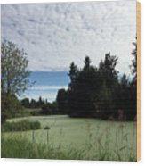 River Of Algae And Stippled Clouds Wood Print