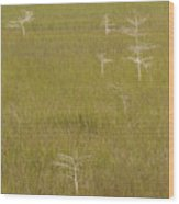 River Of Grass 1a Wood Print