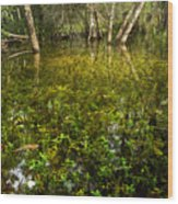 River Of Grass Wood Print