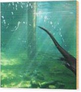 River Otter Swim Wood Print
