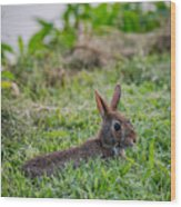 River Rabbit Wood Print