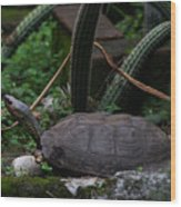 River Turtle 1 Wood Print