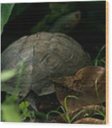 River Turtle 2 Wood Print