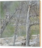 River008 Wood Print