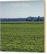 Riverbottom Farms Wood Print