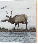 Riverside Elk Wood Print