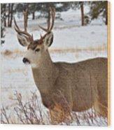 Rmnp Mule Deer 2 Wood Print