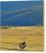 Rmnp Plains In Autumn Wood Print