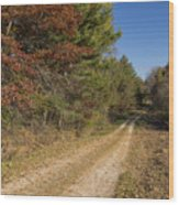 Road In Woods Autumn 5 Wood Print