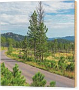 Road Through Custer State Park Wood Print
