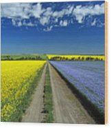 Road Through Flowering Flax And Canola Wood Print