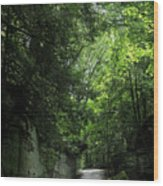 Road Through The Forest Gorge Wood Print