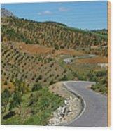 Road Winding Between Fields Of Olive Trees Wood Print