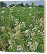 Roadside Bouquet Of Wildflowers In Mchenry County Wood Print