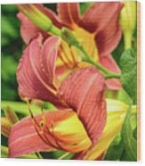 Roadside Lily Wood Print