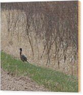 Roadside Rooster Pheasant Wood Print