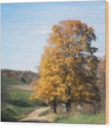 Roadside Tree In Autumn Wood Print