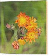 Roadside Wildflower Wood Print