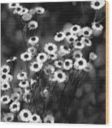 Roadside Wildflowers Wood Print