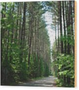 Roadway At Fish Creek Wood Print